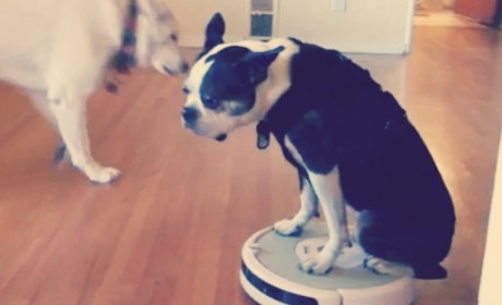 Pets Ride Roombas: A Magical Montage