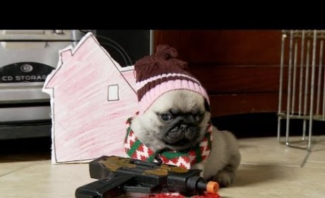 Home Alone As Told By Pug Puppies