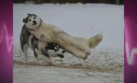 13 Animal Photobombs
