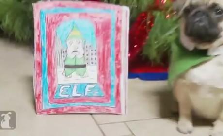 Pugs Recreate Elf: Totally AWWWW-Inspiring!