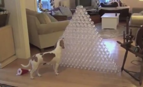 Dog Receives Best Christmas Gift Ever