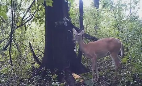 Deer Farts in Forest; Reddit Goes Nuts ('Cause Reddit is Reddit and Farts are Hilarious)