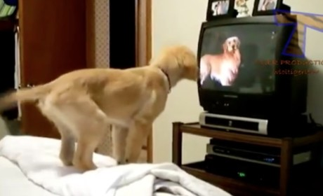 Pets Watch Television, React in Totally Adorable Ways