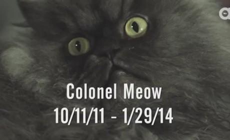 Colonel Meow Dies; Internet Mourns Viral, Furry Feline Sensation