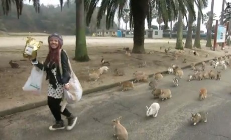 Rabbits SWARM Tourist on Japanese Island: Watch, Be Amazed Now!