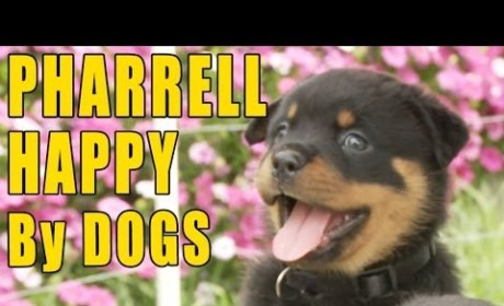 """Puppies Recreate """"Happy"""" and Make Us Happy. No, Really. They Do."""