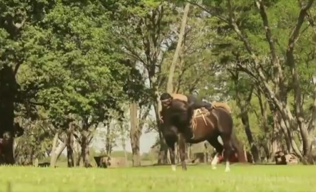 Horse Yoga in Action