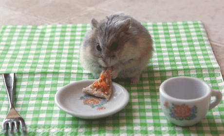 Tiny Hamster Eats Tiny Pizza, Burrito; Melts the Internet Into Mush