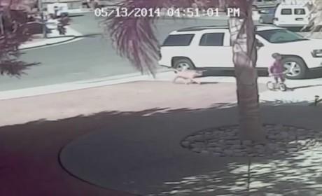 Hero Cat Saves Boy, OWNS Dog
