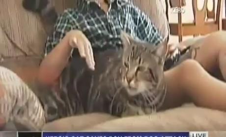 Tara the Hero Cat Interview