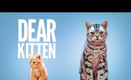 Veteran Cat Offers Kitten Advice, Warns of Monster Vacuum and Mysterious Red Dot