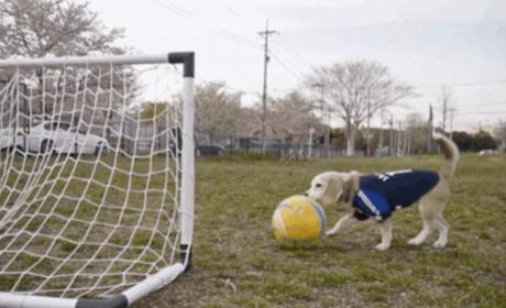 Beagle Plays Soccer, Scores a Goal