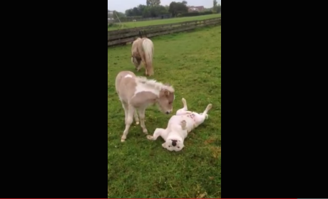 Dog and Horse Play, Are Great Friends