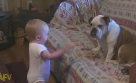 Baby Argues with Puppy, Internet Wins