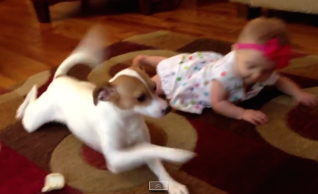 Dog Teaches Baby to Crawl, Reigns Over World Wide Web