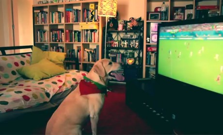Labrador Retriever Reacts to Last-Second World Cup Tie: GOOOOOAL!