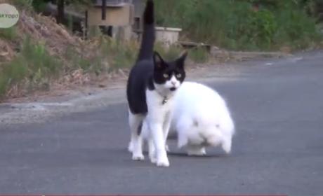 Chubby Bunny Befriends Cat