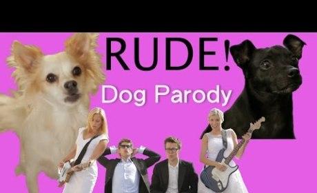 "Dogs Help Genius Internet User Parody ""Rude"""