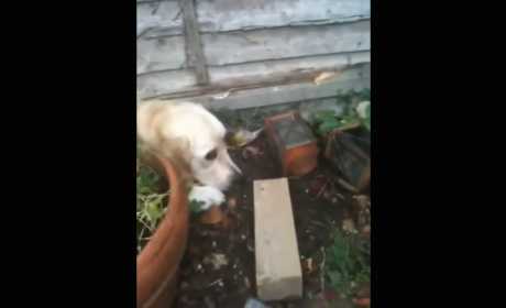 Golden Retriever Refuses to Leave Side of Dying Bird