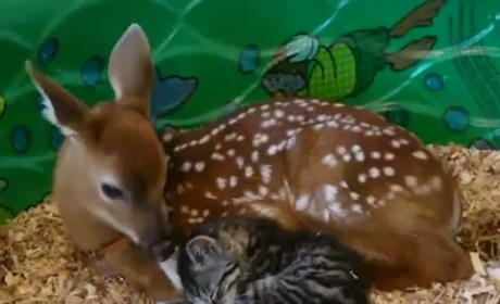 Deer Plays Mother to Kitten, Makes Everything Right in the World