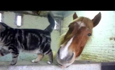 Cat and Horse Nuzzle Up, Are Total Best Friends