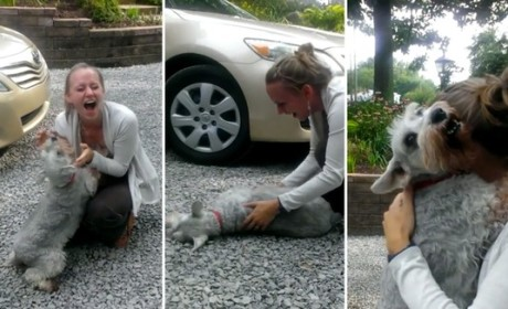 Dog Greets Returning Owner, Passes Out from Excitement