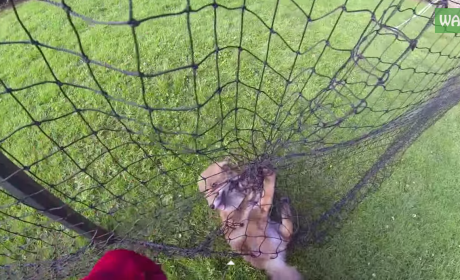 Man Rescues Baby Fox from Net