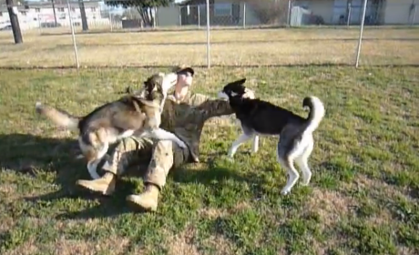 Huskies Greet Returning Soldier, Totally FLIP OUT