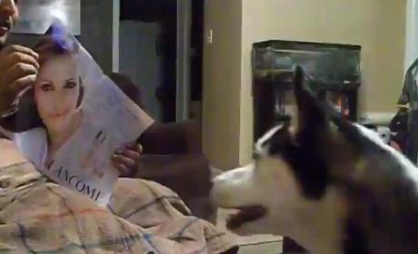 Dog Fears Julia Roberts, Runs Away from Actress in Terror