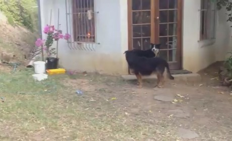 Baby Lion Sneaks Up, Scares the Ish Out of Dog: Watch Now!