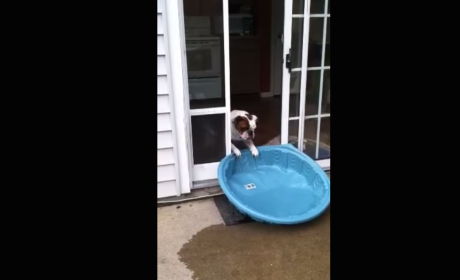 Bulldog Empties and Moves Pool: It's Mine!