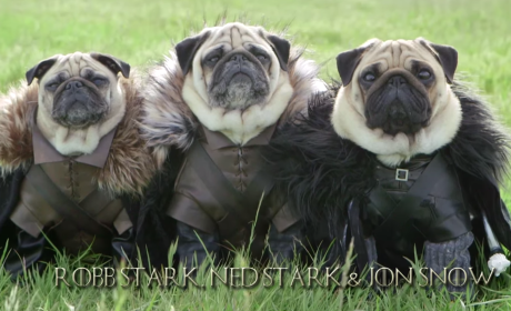 Meet The Pugs of Westeros!