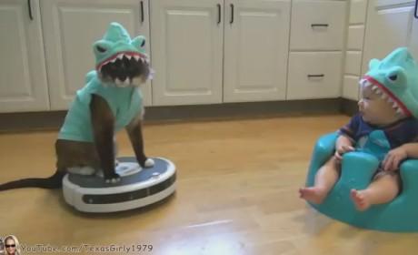 Shark Baby Meets Shark Cat