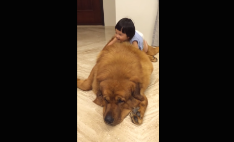 Little Girl Snuggles Up to ENORMOUS Dog, Melts the Internet