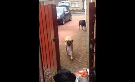 Dog Helps Owner with Grocery Bags, Raises Bar for All Other Dogs