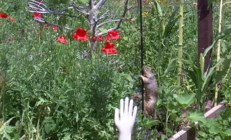 Squirrel Attempts to Raid Bird Feeder, Gets Thwarted by Vaseline