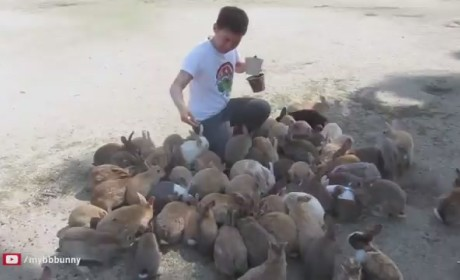 Japanese Bunnies Attack Man with Snuggles: Watch Now!