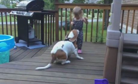 Basset Hound Plays Excitedly with Adorable Owner