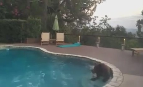 Bear Takes Dip in Family Pool