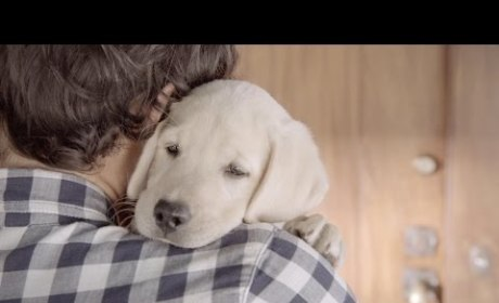 Budweiser Commercial Condemns Drunk Driving, Plays to Emotion of Pet Lovers