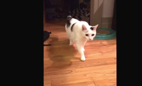 Cat Owner Captures Cat Eating, Falls Over Chair