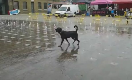 Dog Plays in Water Fountain