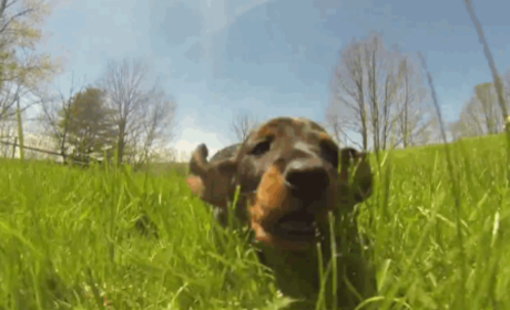 VIDEO: Puppies Play in Field, Make It Impossible Not to Smile