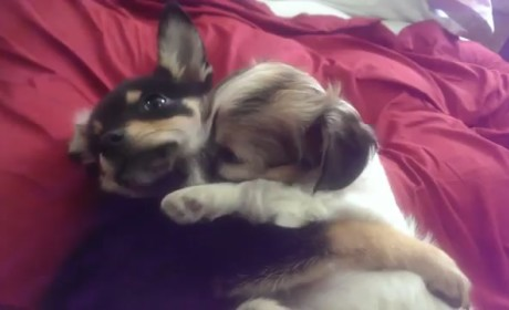 Puppies Cuddle and Play