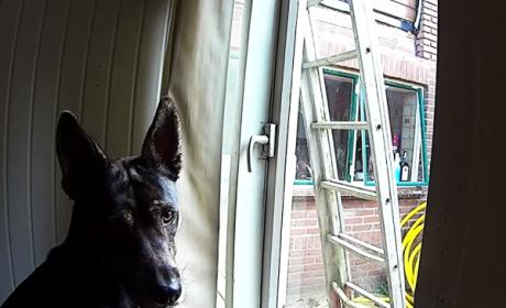 Dog Escapes Through Window!