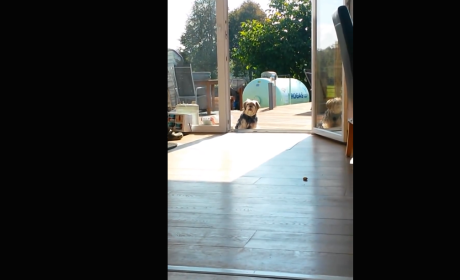 Dog Waits Outside Invisible Door