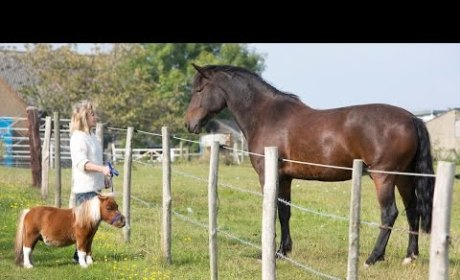Little Horse Acts Like Dog