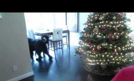 Dog Plays Hide-and-Seek with Little Girl