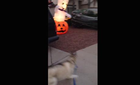 Ghost Frightens Husky