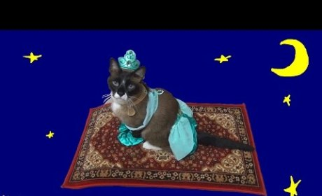 Cat Dresses as Princess Jasmine, Rides Magic Carpet-Covered Roomba